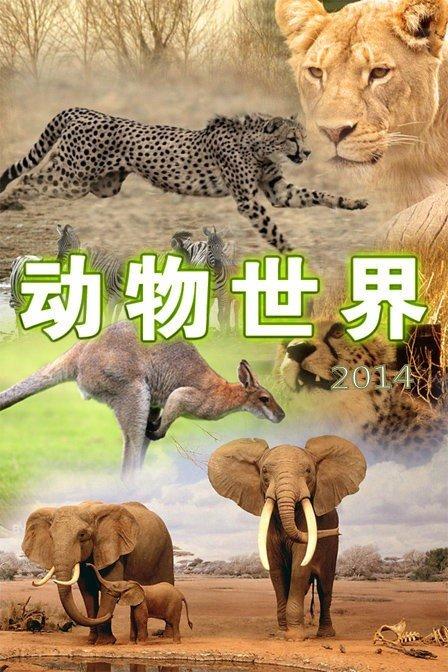 动物世界 2014