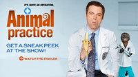 动物诊所 第一季