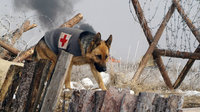 战犬任丁丁
