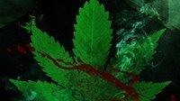 黑森林:糖果屋和420女巫