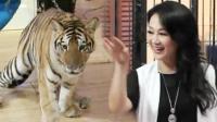 王姬与虎共舞惊艳全场
