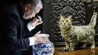 猫当家作主的博物馆
