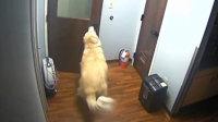 监拍狗狗成功逃出医院