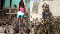 泰猴子泛滥组队