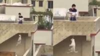 男子楼顶戏耍吊死田园犬 被邻居发现后还朝镜头大笑