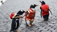 企鹅一家三口穿唐装逛街