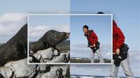 在新西兰跟海狮互怼
