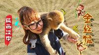 零距离接触野生金丝猴