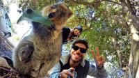 澳洲网红动物生存靠卖萌