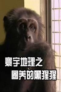 寰宇地理之圈养的黑猩猩