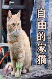 自由的家猫