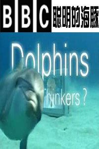 BBC之聪明的海豚