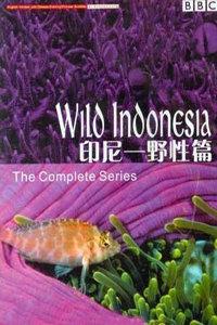 BBC之印尼野生篇