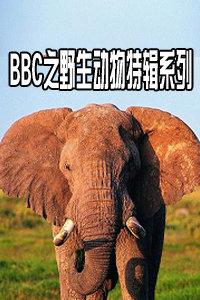 BBC之野生动物特辑系列