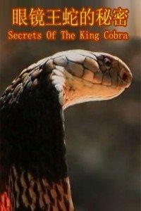 寰宇地理之眼睛王蛇的秘密