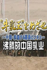 沸腾的中国乳业