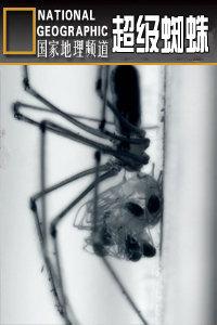寰宇地理之超级蜘蛛