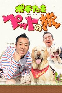 宠物当家之旅 2011