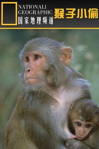 寰宇地理之猴子小偷