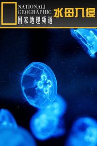 寰宇地理之水母入侵