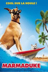 大丹麦狗马默杜克