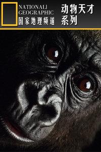 寰宇地理之动物天才系列