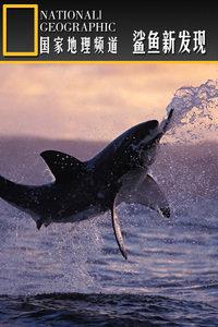 寰宇地理之鲨鱼新发现