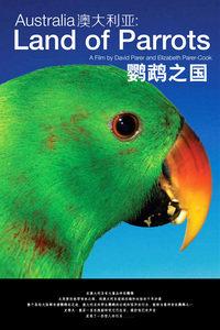 澳大利亚:鹦鹉之国