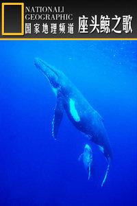 寰宇地理之座头鲸之歌