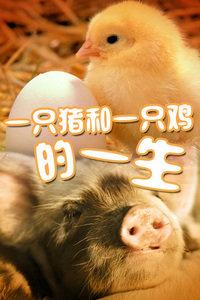 一只猪和一只鸡的一生