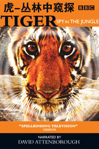 BBC之虎-丛林中窥探