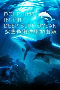 深蓝色海洋里的海豚