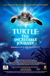 海龟:奇妙之旅