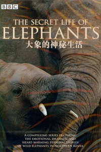 BBC之大象的神秘生活