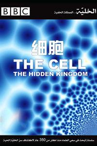 BBC之细胞