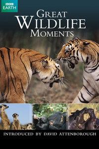 野生动物绝妙瞬间