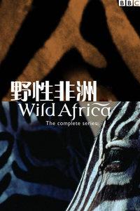BBC之野性非洲