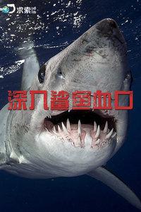 深入鲨鱼血口