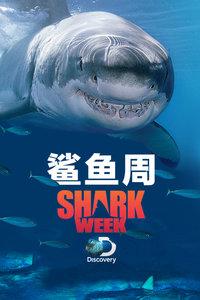 <鲨鱼周>