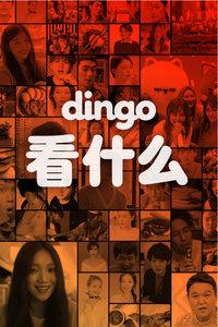 dingo 看什么 2017