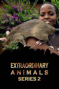 非凡动物 第二季