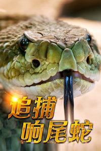 追捕响尾蛇