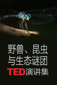 TED演讲集:野兽 昆虫与生态谜团
