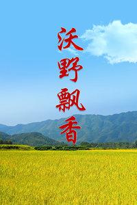 沃野飘香(全26集)