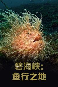 碧海峡:鱼行之地