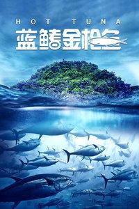 蓝鳍金枪鱼