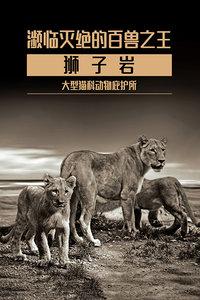 濒临灭绝的百兽之王  狮子岩 大型猫科动物庇护所