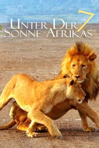 走进非洲7:拂晓之狮