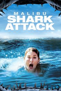 马里布鲨鱼攻击