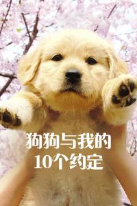 狗狗与我的10个约定